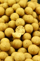 NorthernBaits boilies Milky Amino Scopex